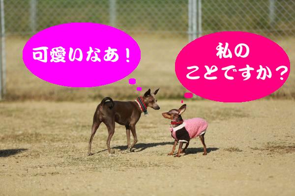 IMG_8145_convert_20141121182455.jpg