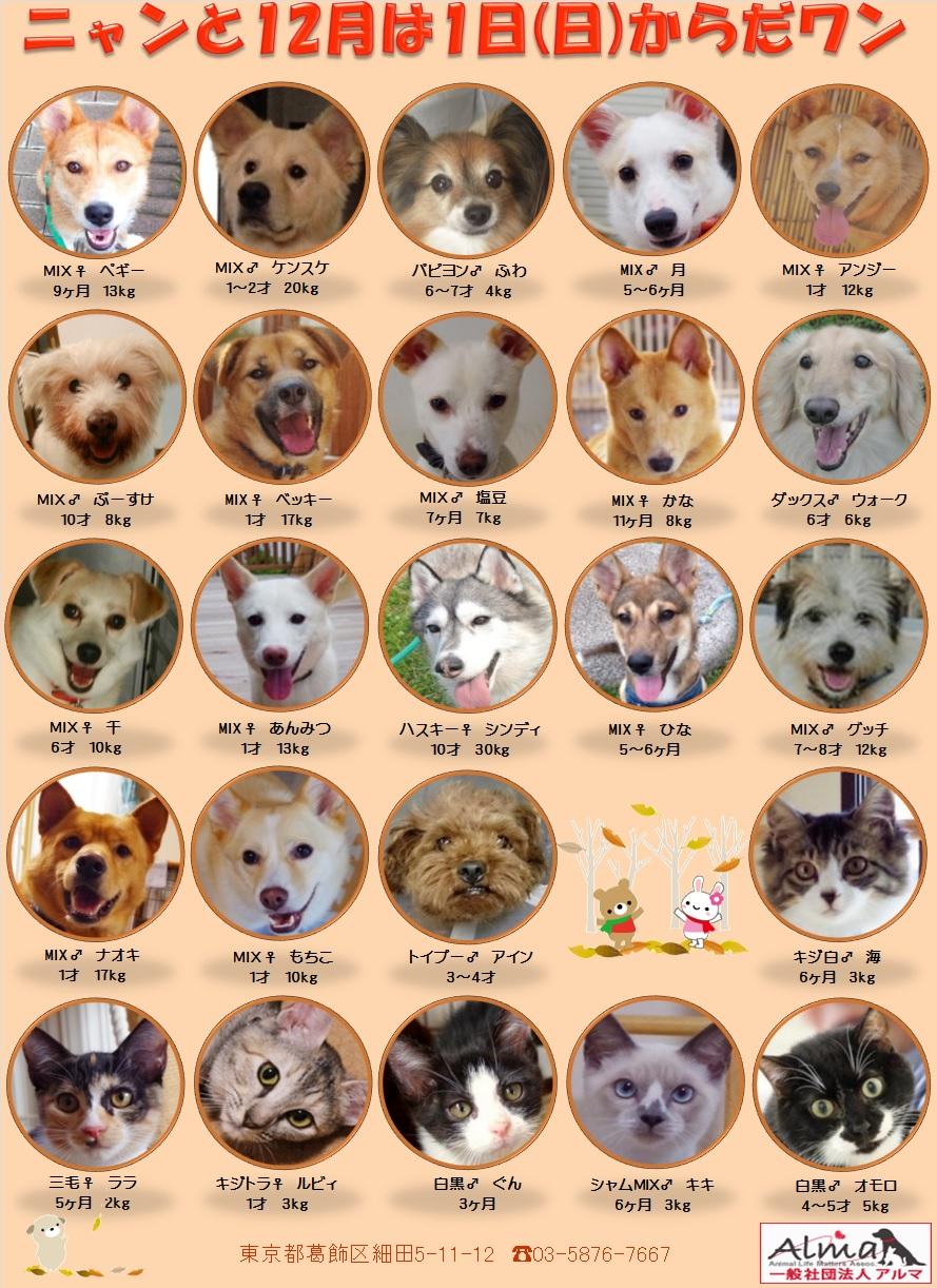 ALMA ティアハイム 12月1日 参加犬猫一覧