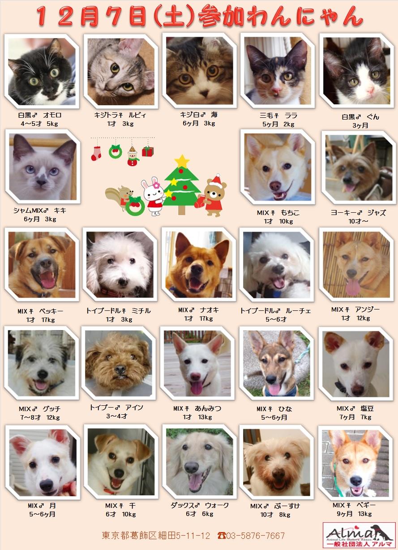ALMA ティアハイム 12月7日 参加犬猫一覧