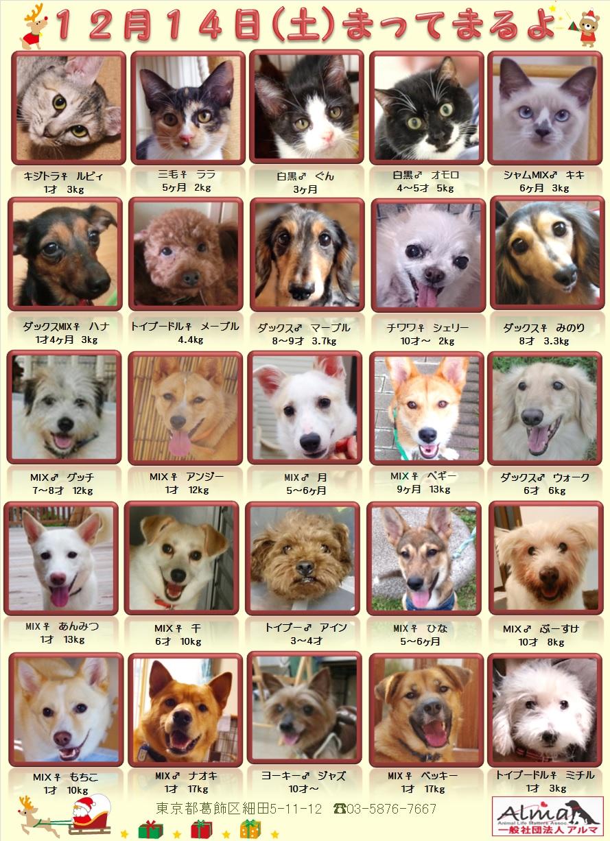 ALMA ティアハイム 12月14日 参加犬猫一覧