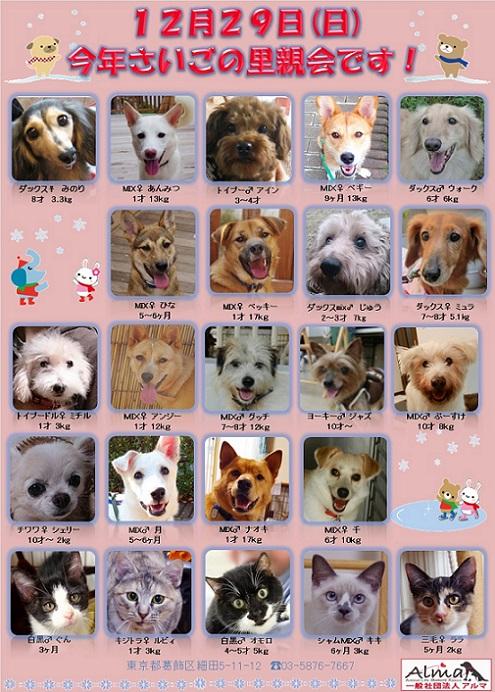 ALMA ティアハイム 12月29日 参加犬猫一覧