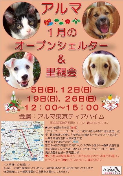 ALMA 1月オープンシェルター&里親会 お知らせ