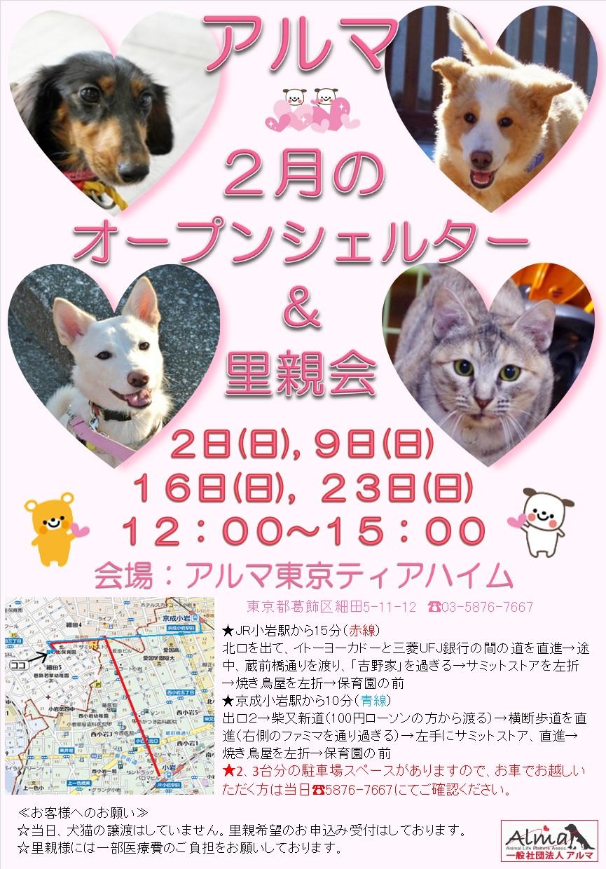 2月オープンシェルター&里親会お知らせ_381KB