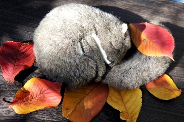 眠り栗鼠②