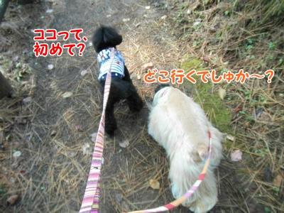 001_20121031211738.jpg