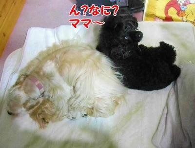 001_20121126220510.jpg