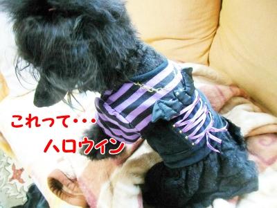 004_20121021210330.jpg
