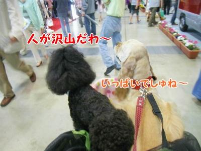 004_20130521220500.jpg