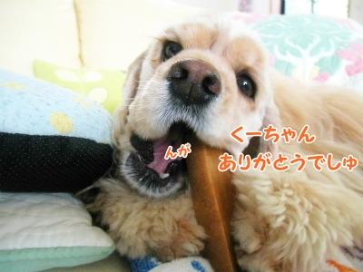 005_20121218223150.jpg
