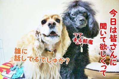 006_20120831210601.jpg