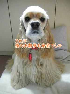 006_20121211210542.jpg