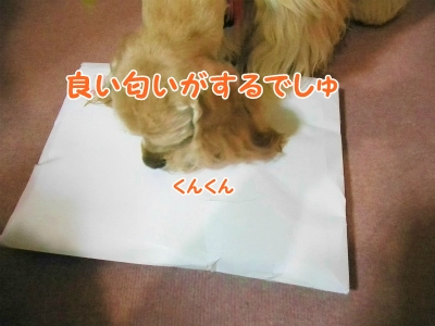 006_20121225200249.jpg