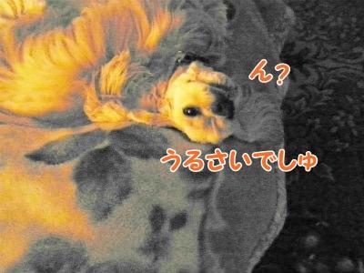 009_20121106221333.jpg