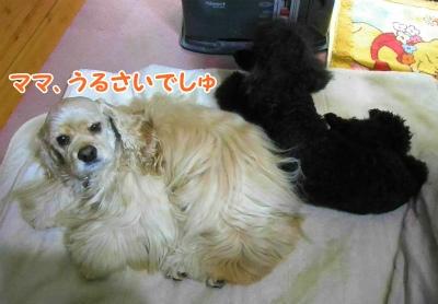 009_20121126221041.jpg