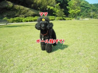 010_20120603213227.jpg