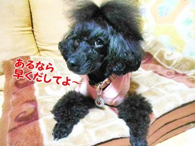 010_20121021210154.jpg
