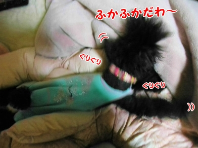 010_20121029215529.jpg
