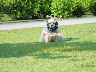 011_20120603213227.jpg
