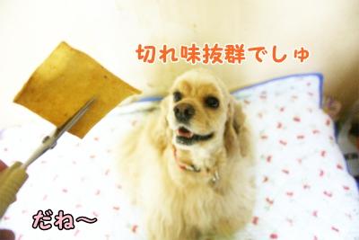 011_20120808211708.jpg