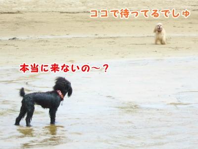 011_20120820202559.jpg