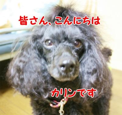 011_20120831210601.jpg