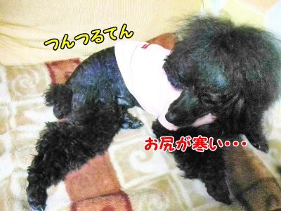 011_20121021210154.jpg