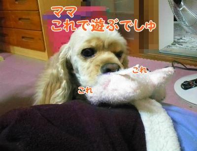 011_20121201162701.jpg