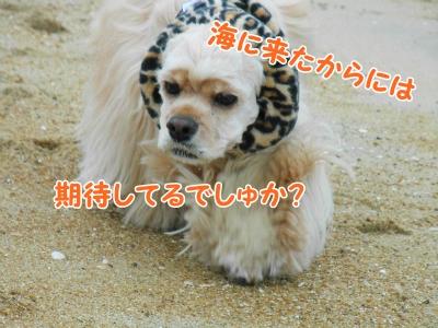 012_20121111212720.jpg