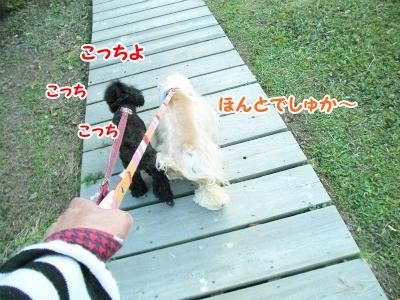 013_20121011225500.jpg