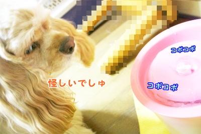 014_20120808211739.jpg