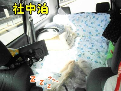 017_20120505132850.jpg