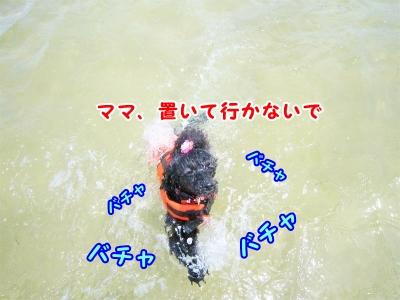 018_20120820205514.jpg