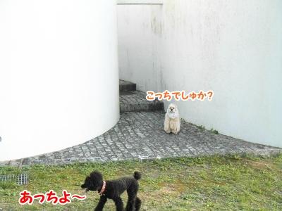 018_20121011225526.jpg