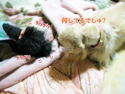 021_20121029215559.jpg