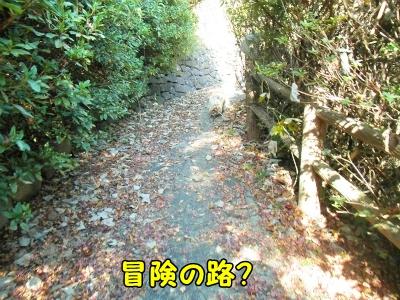 021_20121208191224.jpg