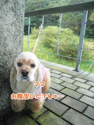 022_20121002215025.jpg