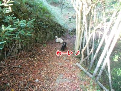 022_20121208191225.jpg