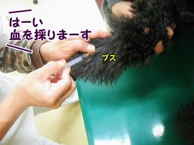 022_20130420213845.jpg