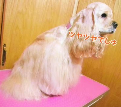 024_20121223104415.jpg