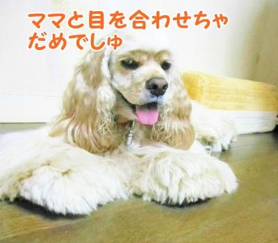 028_20120831213028.jpg
