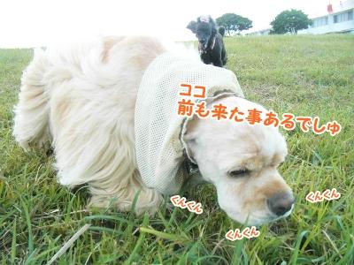 028_20120924212011.jpg