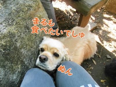 028_20121103222041.jpg