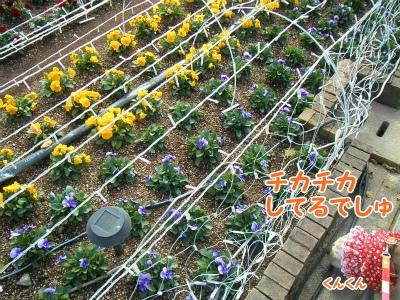 028_20121126210322.jpg