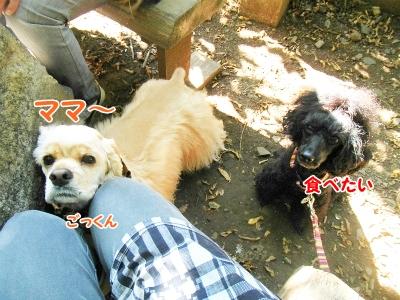 030_20121103222112.jpg
