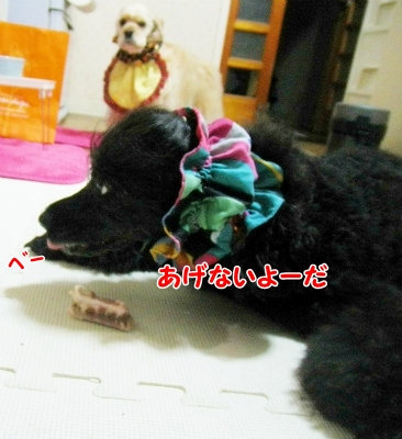 030_20121213223810.jpg