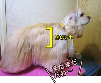 030_20130322211421.jpg