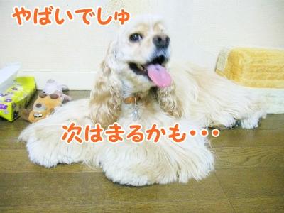 031_20120831213026.jpg