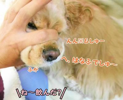 031_20121202161816.jpg