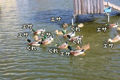 031_20121210223345.jpg