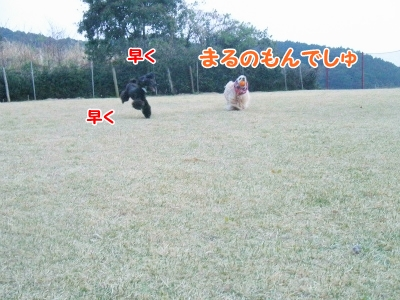 034_20130415213653.jpg